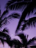 Palm Trees with Moon, Hawaii, USA Photographic Print by John & Lisa Merrill