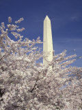 Cherry Blossom Festival and the Washington Monument, Washington DC, USA Photographic Print by Michele Molinari