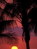 Sunset and Coconut Palms near Malpais, Nicoya Peninsula, Costa Rica Photographic Print by Stuart Westmoreland