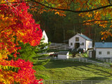 Morning Chores at the Imagination Morgan Horse Farm, Vermont, USA Photographic Print by Charles Sleicher