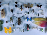 Collection of Insects, Barro Colorado Island, Panama Fotografie-Druck von Christian Ziegler