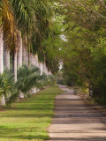 Sidewalk Lined with Palm Trees, Miami, Florida, USA Photographic Print by Adam Jones