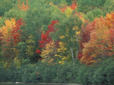 Fall Colors of the Northern Forest, Maine, USA Photographic Print by Jerry & Marcy Monkman