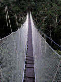 Canopy Walkway in the Peruvian Rainforest, Sucusari River Region, Peru Photographic Print by Gavriel Jecan