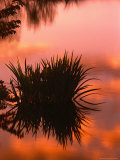 Sunrise Reflection in Swampy Wilderness, Wakodahatchee Preserve, Florida, USA Photographic Print by Jerry Ginsberg