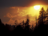 Mountain-top Trees Silhouetted at Sunset  Great Smoky Mountains National Park  Tennessee  USA
