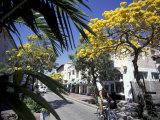 Espanola Way Biker, South Beach, Miami, Florida, USA Fotografie-Druck von Robin Hill