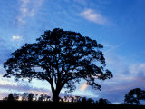 Oak Trees at Sunset on Twin Oaks Farm, Connecticut, USA Fotografie-Druck von Jerry & Marcy Monkman
