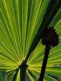 Tropical Foliage of Everglades National Park, Florida, USA Photographic Print by Jerry Ginsberg