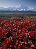 Mt. McKinley and Autumn Foliage, Denali National Park, Alaska, USA Photographic Print by Hugh Rose