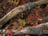 Oak-Hickory Forest in Litchfield Hills, Kent, Connecticut, USA Photographic Print by Jerry & Marcy Monkman