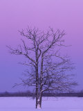Two Trunked Tree at Sunrise, Chippewa County, Michigan, USA Photographic Print by Claudia Adams