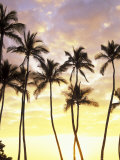 Silhouetted Palms at Sunset, Kamaole Park 1, Maui, Hawaii, USA Photographic Print by Darrell Gulin