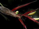 Heliconia and Stone Fly, Machu Picchu, Peru Photographic Print by Andres Morya