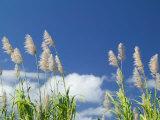 Back Country Sugar Cane Field, Kauai, Hawaii, USA Photographic Print by Terry Eggers