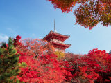 Autumn, Kyoto, Japan Photographic Print by Shin Terada