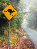 Road through Rainforest, Lamington National Park, Gold Coast Hinterland, Queensland, Australia Photographic Print by David Wall