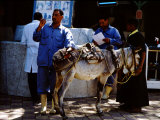 Vet Taking Temperature of Sick Donkey, Brooke Hospital for Animals, Luxor, Egypt Photographic Print by Cindy Miller Hopkins