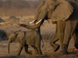 African Elephants, Makalolo Plains, Hwange National Park, Zimbabwe Photographic Print by Pete Oxford