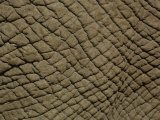African Elephant Skin Photographic Print by Pete Oxford