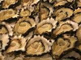Oysters at Sydney Fish Market, Sydney, Australia Photographic Print by David Wall