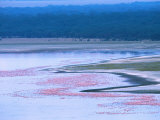 Flocks of Lesser Flamingos, Lake Nakuru, Kenya Photographic Print by Charles Sleicher