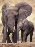 African Elephants, Tarangire National Park, Tanzania Fotografisk tryk af Art Wolfe