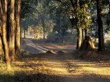 Rural Road, Kanha National Park, India Photographic Print by Art Wolfe