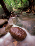 Rainforest Stream, Bako National Park, Borneo, Malaysia Photographic Print by Art Wolfe