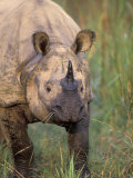 Indian Rhinoceros, Royal Chitwan National Park, Nepal Photographic Print by Art Wolfe