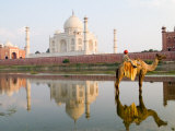 Young Boy on Camel, Taj Mahal Temple Burial Site at Sunset, Agra, India Fotografiskt tryck av Bill Bachmann