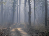 Landscape, Kanha National Park, India Photographic Print by Art Wolfe