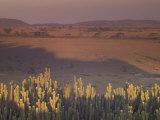 Landscape View, Serengeti National Park, Tanzania Photographic Print by Art Wolfe