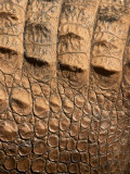 Detail of Crocodile Skin, Australia Photographic Print by David Wall