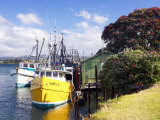 Fishing Boats, Tauranga Harbor, Tauranga, New Zealand Photographic Print by David Wall