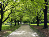Pathway and Trees, Kings Domain, Melbourne, Victoria, Australia Photographic Print by David Wall