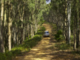 Four Wheel Drive on Forest Track, near Bright, Victoria, Australia Photographic Print by David Wall