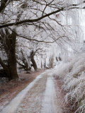 Hoar Frost and Road by Butchers Dam, near Alexandra, Central Otago, South Island, New Zealand Photographic Print by David Wall
