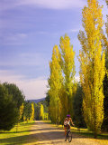 Murray to the Mountains Rail Trail, Bright, Victoria, Australia Photographic Print by David Wall