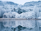 Reflections and Hoar Frost, Butchers Dam, near Alexandra, Central Otago, South Island, New Zealand Photographic Print by David Wall