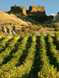 Mt Difficulty Vineyard and Historic Sluicings, Bannockburn, South Island, New Zealand Photographic Print by David Wall