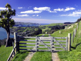 Gate and Cabbage Tree on Otago Peninsula, above MacAndrew Bay and Otago Harbor, New Zealand Photographic Print by David Wall