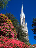 Rhododendrons and First Church, Dunedin, New Zealand Photographic Print by David Wall