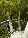 Otway Fly Tree Top Walk, Otway Ranges, Victoria, Australia Photographic Print by David Wall