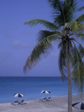 Beach Chairs, Caribbean Palms Photographic Print by Bill Bachmann