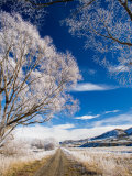 Hoar Frost and Otago Central Rail Trail near Oturehua, Central Otago, South Island, New Zealand Photographic Print by David Wall