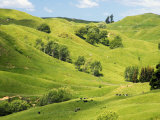 Farmland near Gisborne, New Zealand Photographic Print by David Wall