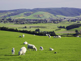Farmland at Milburn, South Otago, South Island, New Zealand Photographic Print by David Wall