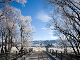 Bridge and Hoar Frost near Oturehua, Central Otago, South Island, New Zealand Photographic Print by David Wall