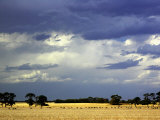 Approaching Storm, near Geelong, Victoria, Australia Photographic Print by David Wall